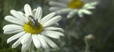 Apocalipse das abelhas pode ser evitado com drones polinizadores, apontam cientistas