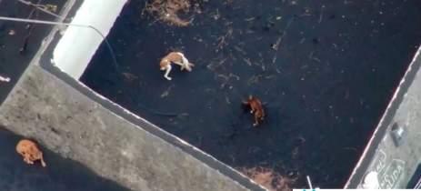 Piloto de drone tentará resgatar cães cercados por lava de vulcão na Espanha