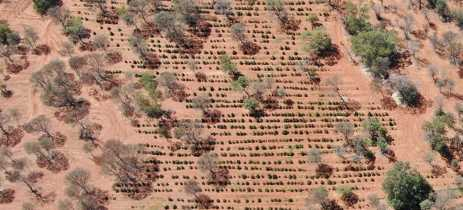 Drone mostra mais de US$ 3,5 milhões em maconha apreendida na Austrália