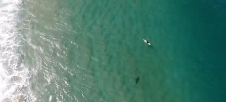 Piloto de drone Mavic 2 Enterprise consegue alertar surfista sobre perigo de tubarão