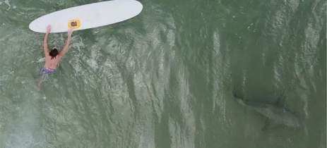 Imagens feitas com drones mostram surfistas e tubarões lado a lado