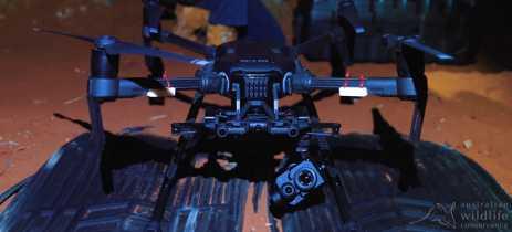Pesquisadores utilizam drones para monitorar mamíferos ameaçados de extinção