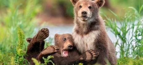 Prêmio das fotos mais engraçadas do reino animal divulga seus finalistas de 2020