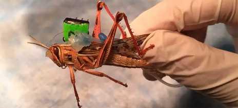 Universidade cria gafanhoto ciborgue que identifica explosivos