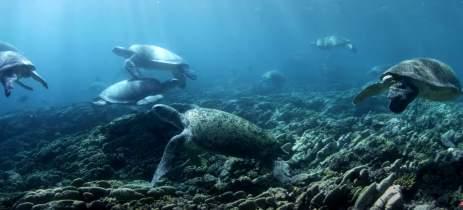 Drone grava mais de 64.000 tartarugas na Grande Barreira de Coral, Austrália