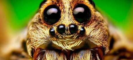 Cientistas criam sensor de profundidade inspirado na visão de aranhas