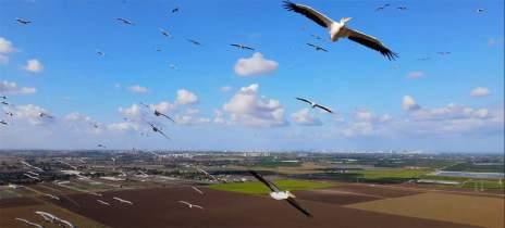 Veja belas imagens de migração de pelicanos capturadas por drone DJI Mavic Air 2