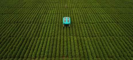 Robôs da Google analisam plantas individualmente para ajudar agricultores