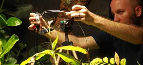 Cientistas criam câmera para plantas que utiliza energia da fotossíntese