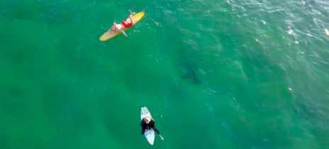 Surfistas nadam mais próximos de tubarões do que imaginam; indicam imagens de drones