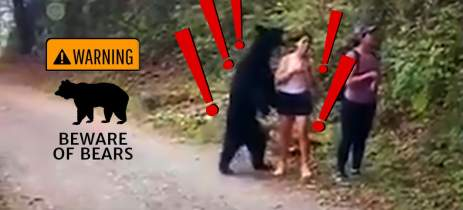 Esta mulher tirou uma selfie com um URSO que estava perto demais...- Veja vídeo