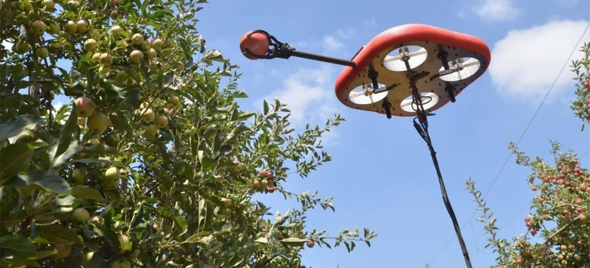 Empresa desenvolve drone para coletar frutas - veja vídeo
