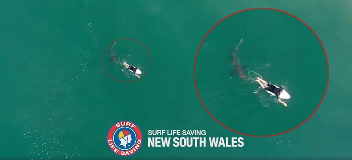 Drone captura tubarão desistindo de atacar surfista