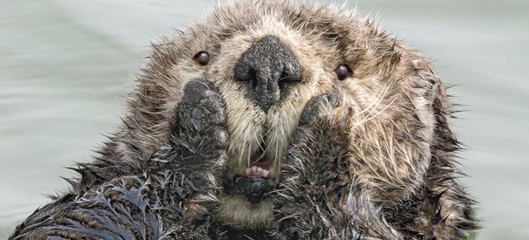 Confira as imagens finalistas do Comedy Wildlife Photography Awards 2019!
