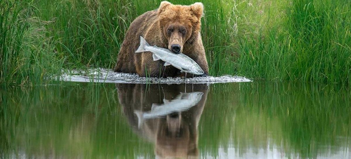 Concurso premia as melhores fotos da natureza em 2020, confira algumas