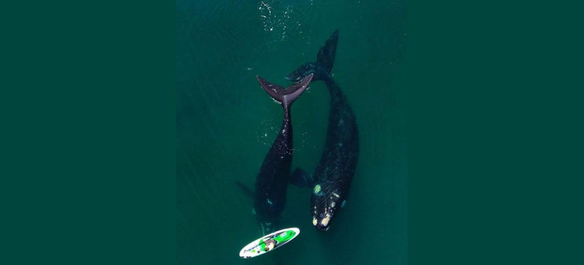 Drone captura imagens sensacionais de baleia acompanhando caiaque na Patagonia