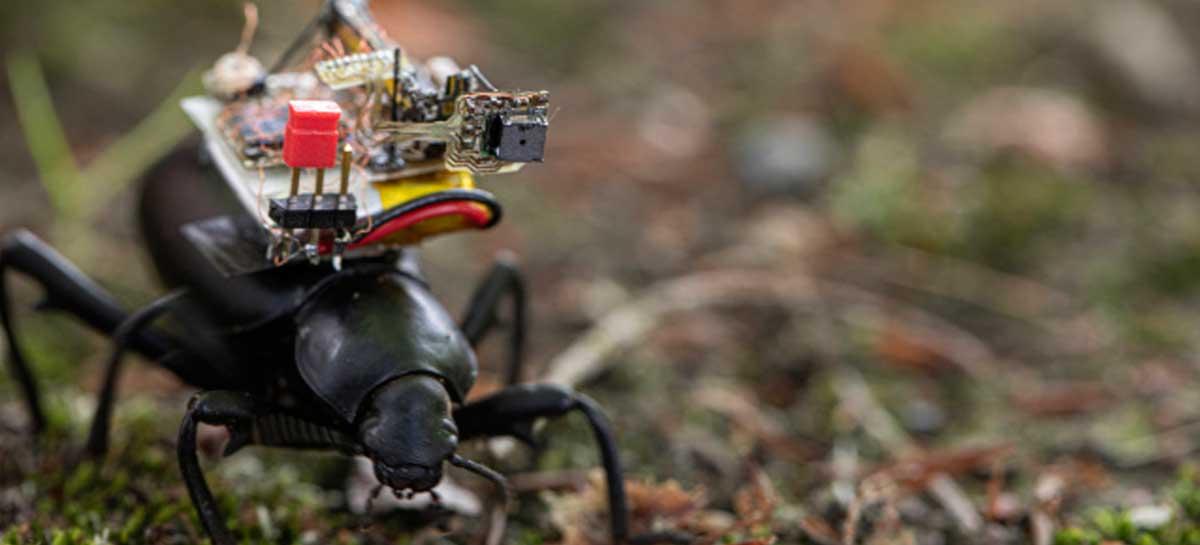 Pesquisadores criam mochila com câmera para besouros