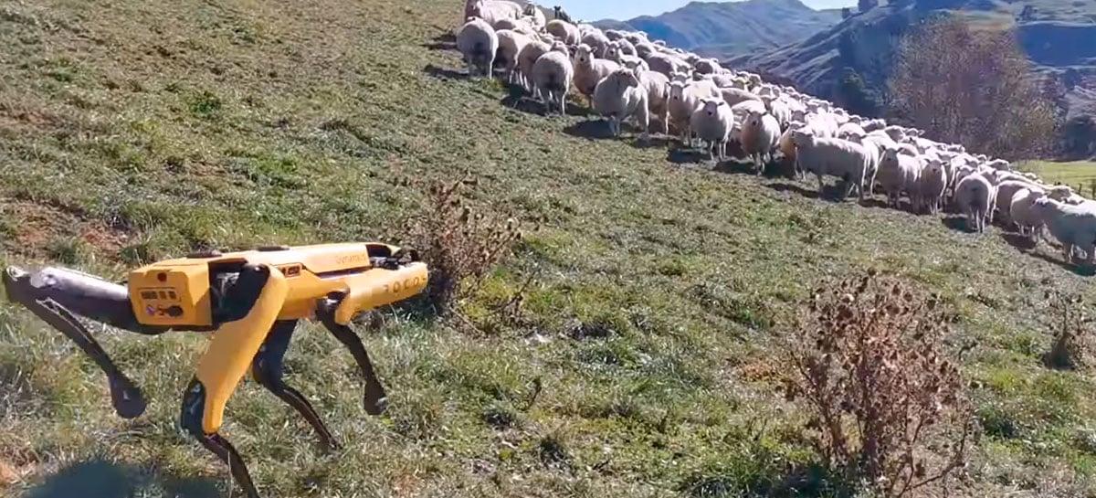 Boston Dynamics mostra seu robô Spot agindo como cão pastor, mas ...