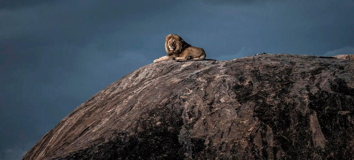 Conheça os 25 finalistas do Fotógrafo de Vida Selvagem do Ano - para o público!