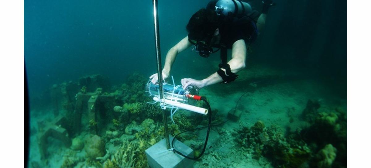 Intel anuncia o CORaiL, projeto baseado em IA que visa a preservação de recifes de corais