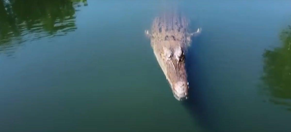 Drone é atacado por crocodilo em filmagem de documentário