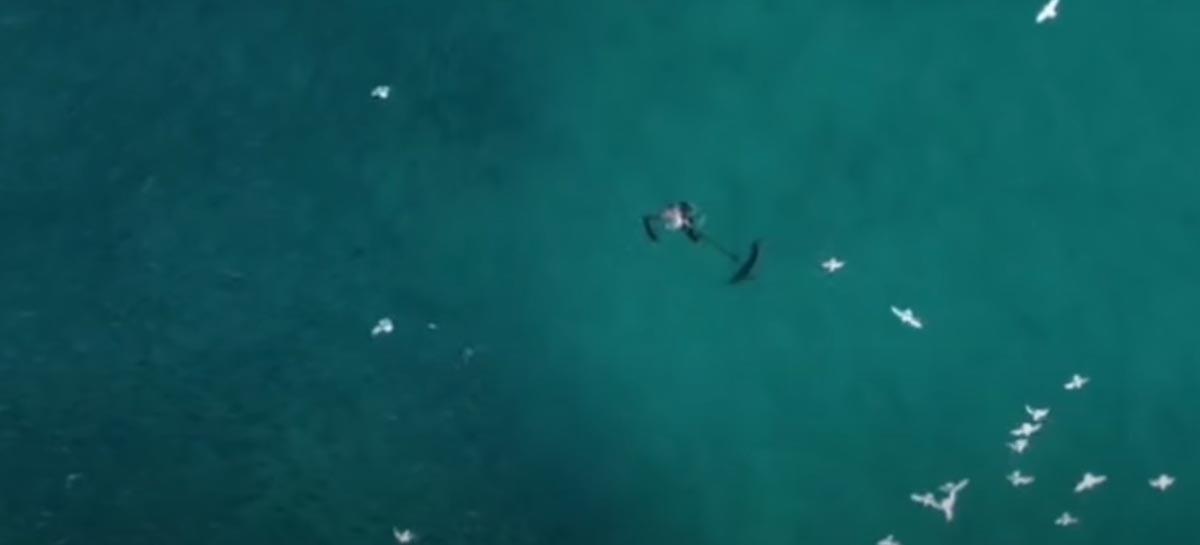 Drone grava mergulhador se defendendo de tubarão entre cardume gigante de peixes