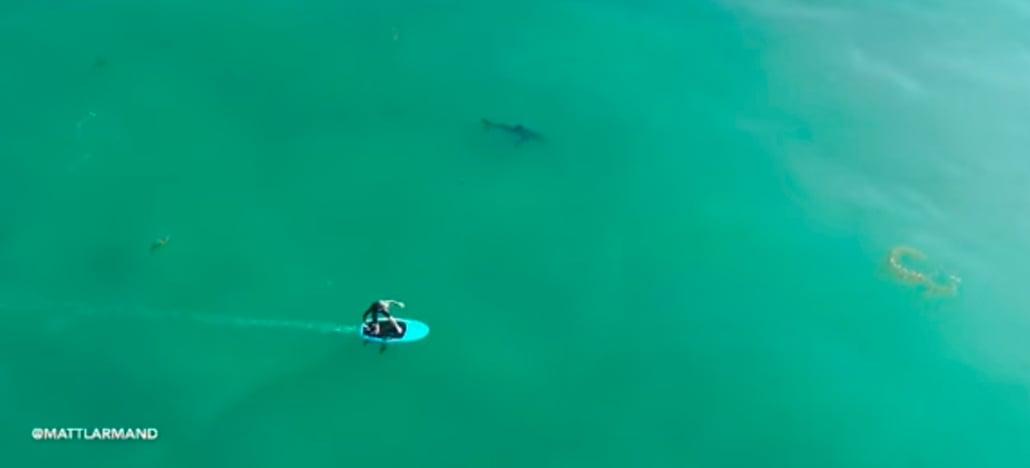 Imagem capturada por drone mostra tubarão branco ao lado de surfistas