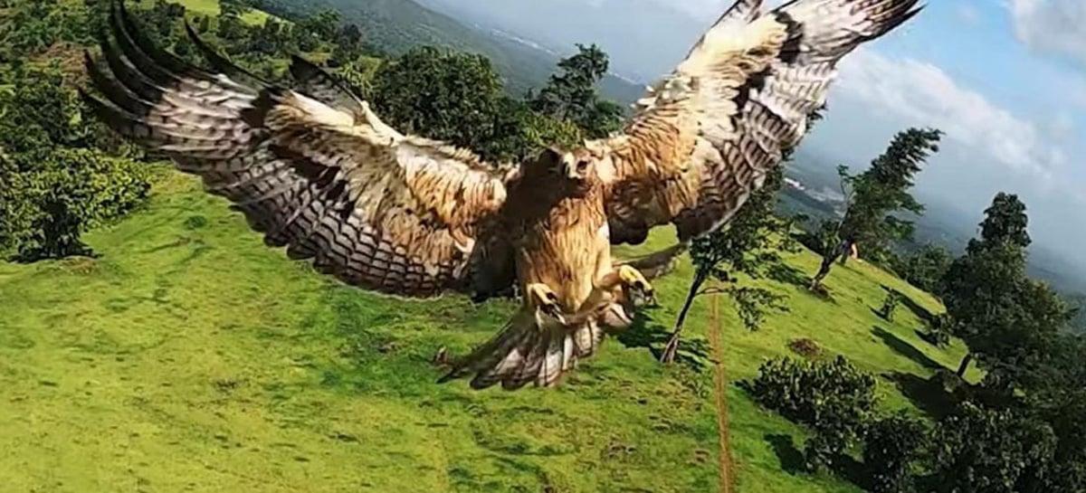 Pássaro ataca drone FPV durante o voo