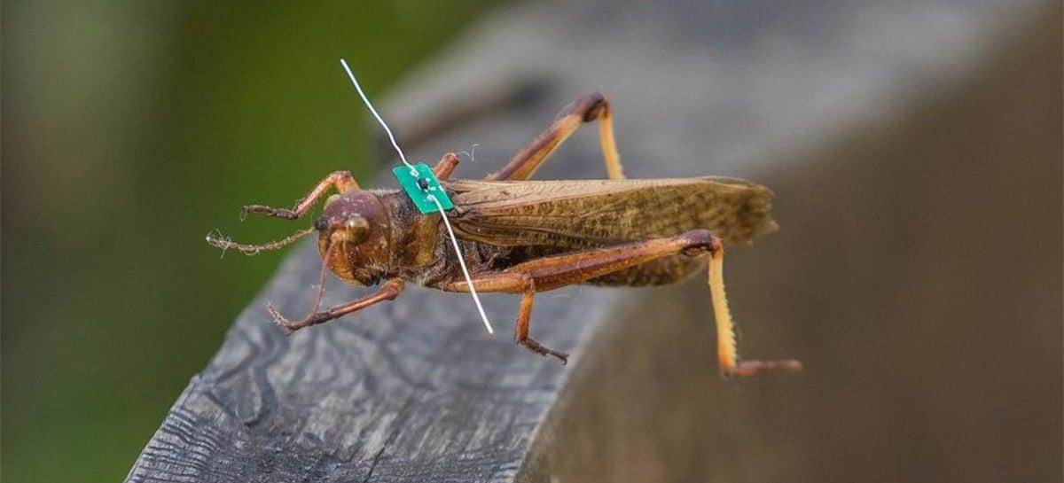 Universidade da Nova Zelândia quer usar drones para rastrear insetos ameaçados