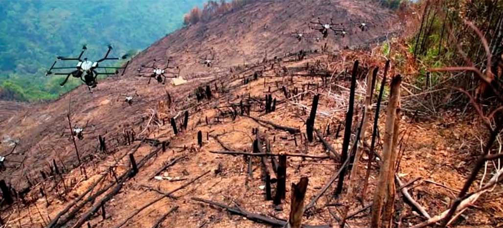 FAA autoriza startup DroneSeed a plantar árvores com drones em áreas de queimadas