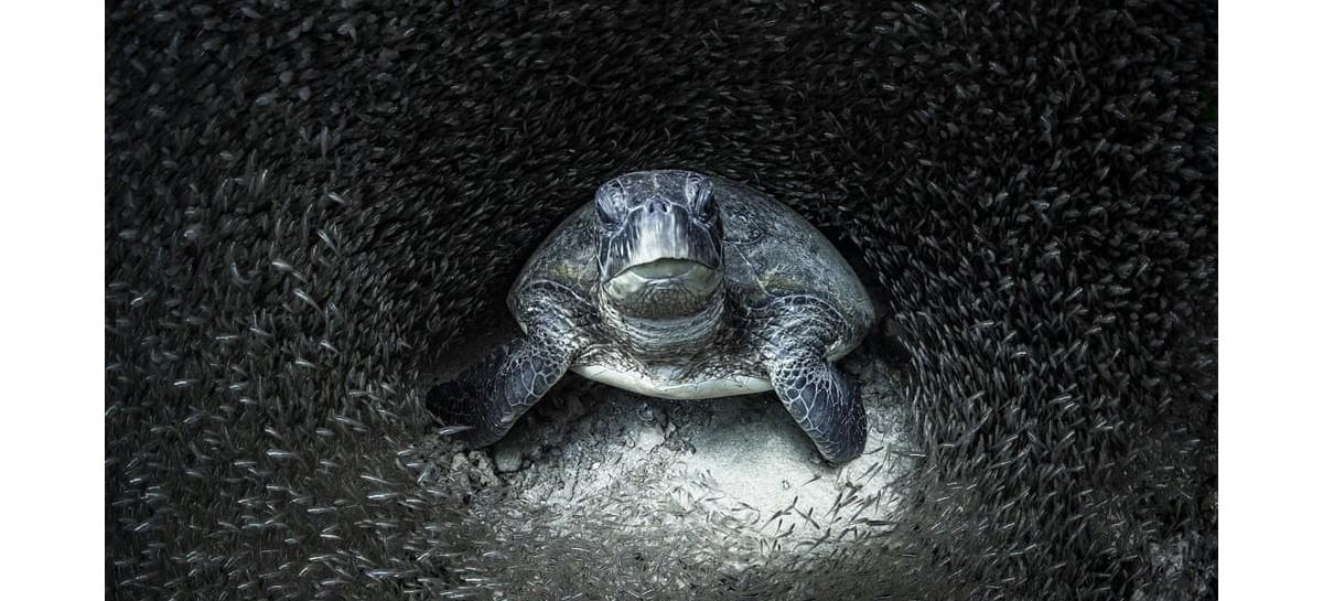 Ocean Awards: imagens impressionantes mostram impacto da poluição na vida marinha