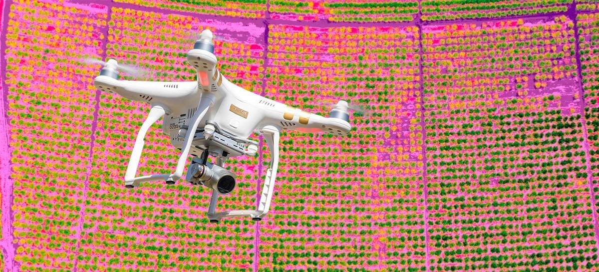 Drones  estão sendo usados para identificar sintomas da pior doença para plantas cítricas