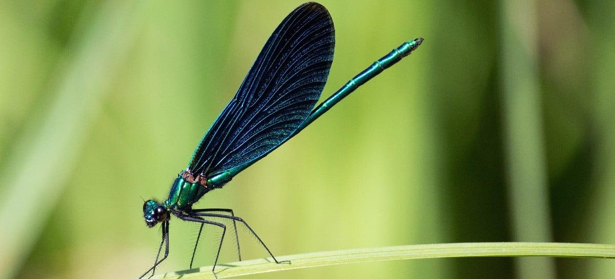 Forças Armadas americanas planeja desenvolvimento de drones em forma de insetos