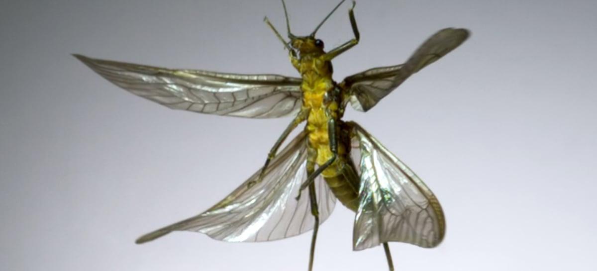 Cientista filma insetos voando a 3.200fps – Veja o vídeo