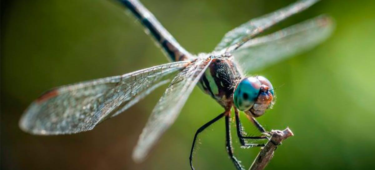 Drones do futuro podem ser inspirados em libélulas - Confira fotos de um protótipo
