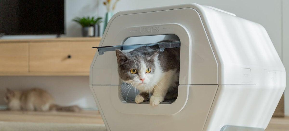 Caixa de areia inteligente da LuluPet rastreia a saúde do seu gato através das fezes