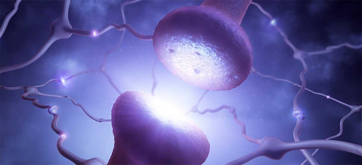 Neurônios biológicos e artificiais conseguem se comunicar através da internet