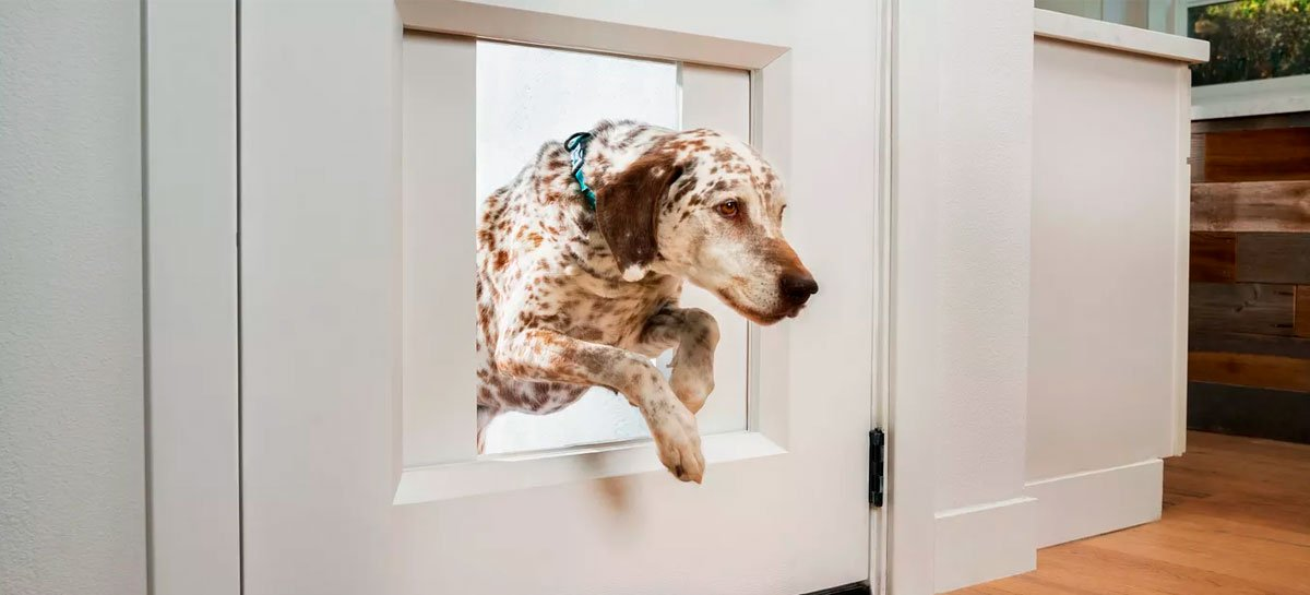 Empresa faz abertura para cachorro em porta que abre por comando no smartphone