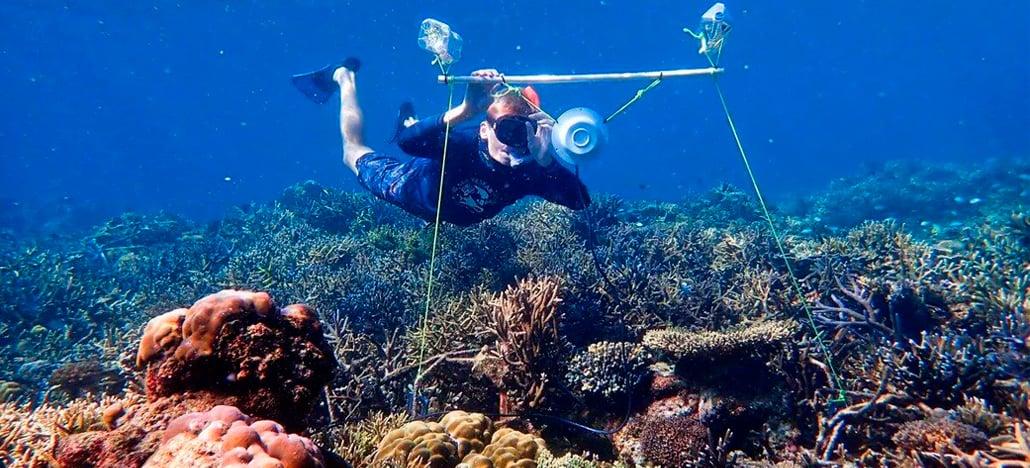Cientistas instalam alto-falantes no fundo do mar para repopular recifes danificados