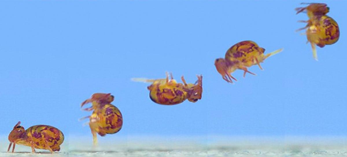 Vídeos de insetos gravados em 72.000 fps (slow-motion) gera imagens incríveis