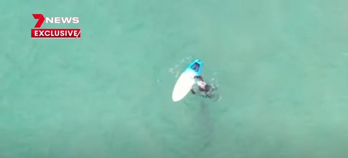 Surfista fica a centímetros de tubarão em novas imagens capturadas por drone