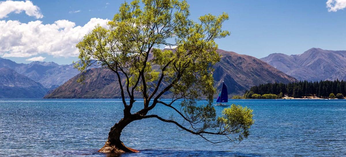 Árvore mais famosa da Nova Zelândia, Wanaka Tree foi vandalizada