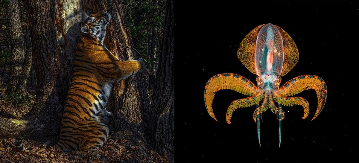 Veja quais foram as imagens vencedoras do Wildlife Photographer of the Year 2020!