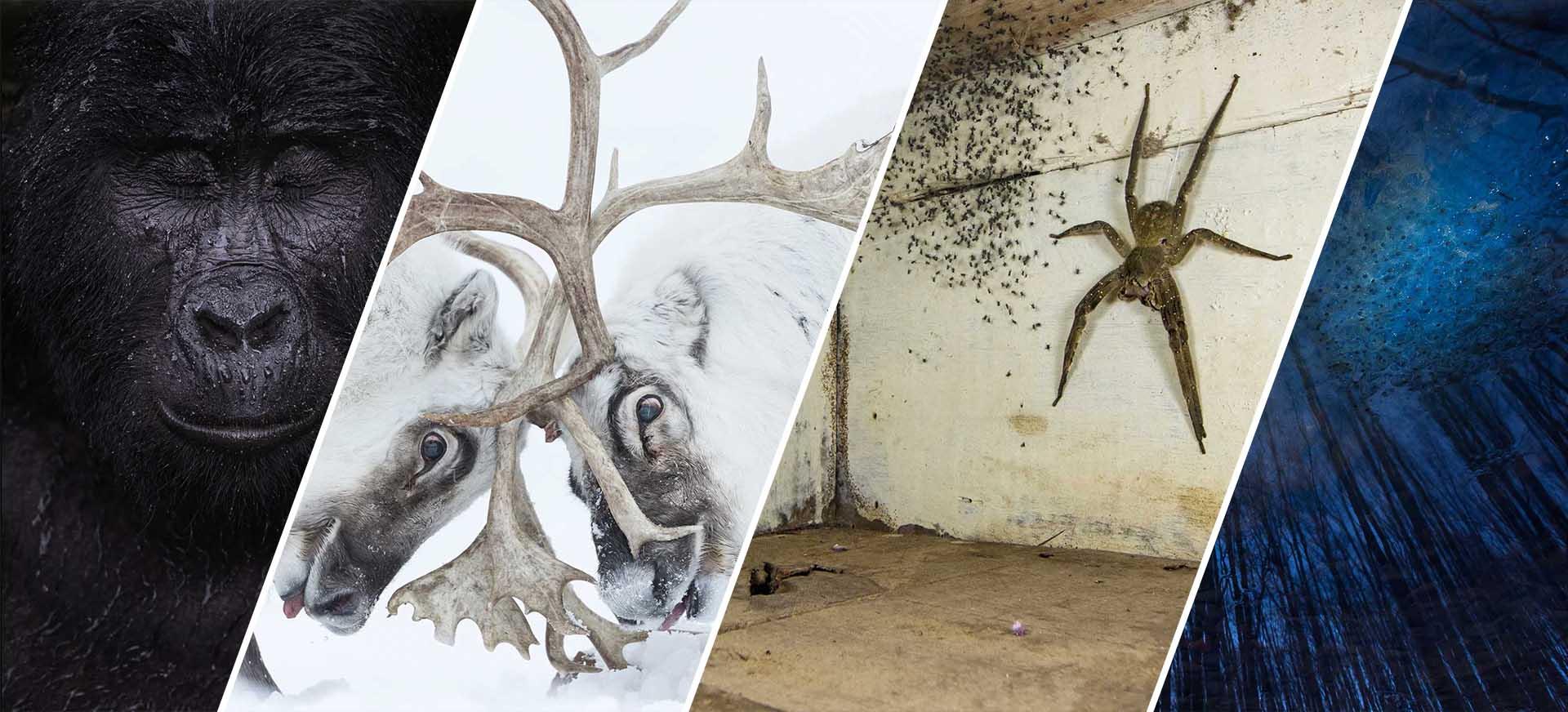 Concurso de fotos de vida selvagem revela vencedores com imagens impressionantes!